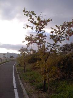 KC3Y0106.jpg